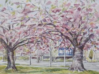 Prunus Japonica / Japanse Sierkers